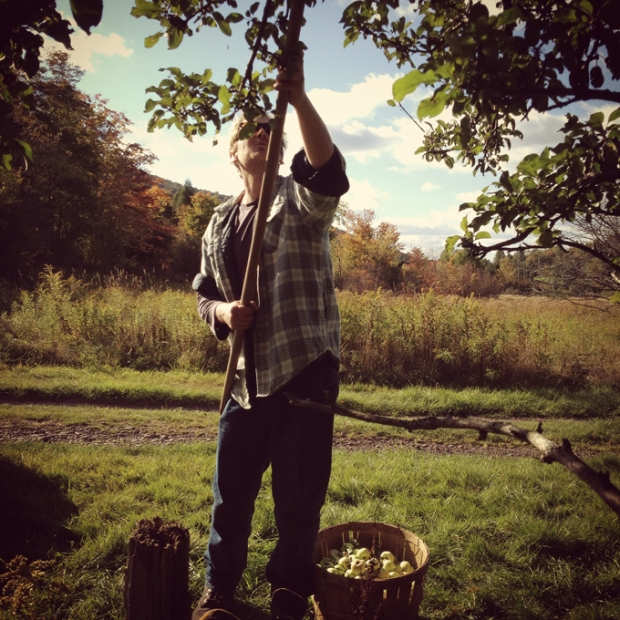 Alex Wilson of Wayside Cider, collecting apples last fall. Photo courtesy of Wayside Cider
